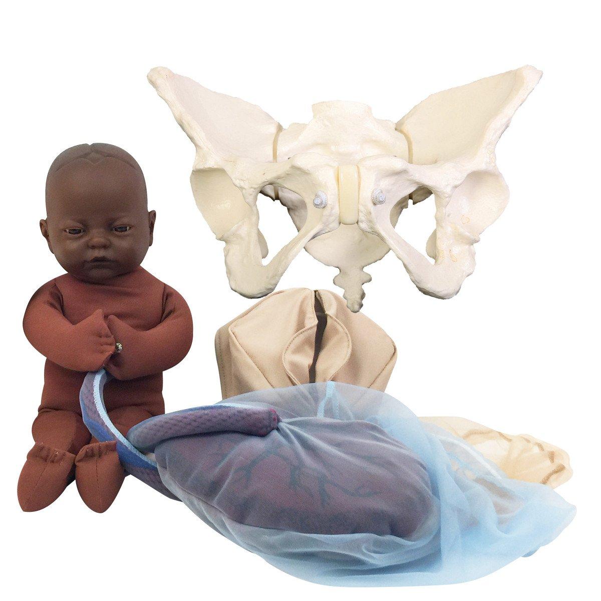 childbirth graphics pelvis model set